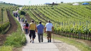 Wein-Verkaufswagen bei der 4. Bechtolsheimer Weinwanderung